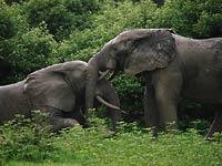 słonie w parku Mole